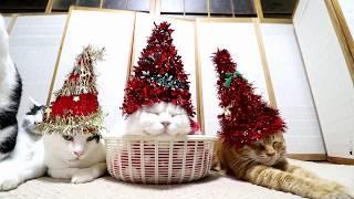 クリスマスツリー帽子 181225