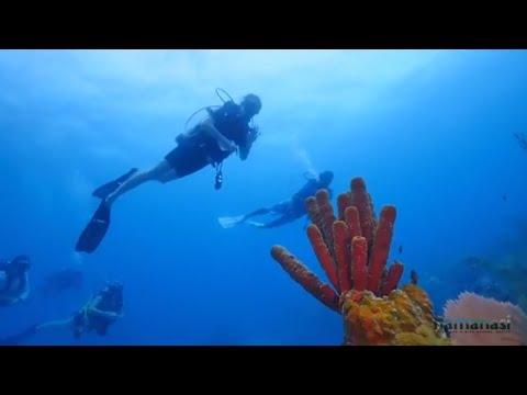 Belize Barrier Reef Diving With Hamanasi Resort