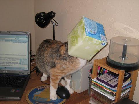 Cats Head Stuck In Kleenex Box | Cabin Fever Vlog #1