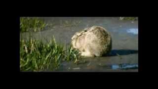 ClickClickDecker - Der ganze halbe Liter (Official Video)
