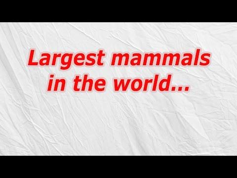 Largest mammals in the world (CodyCross Crossword Answer)
