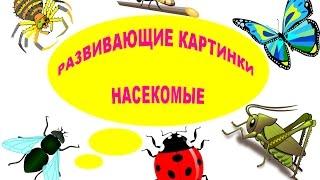"""РАЗВИВАЮЩИЕ КАРТИНКИ """"НАСЕКОМЫЕ"""". УЧИМ НАСЕКОМЫХ... Learning insects..."""