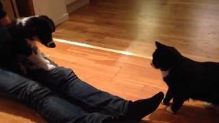 Bliss träffar katten Sixten #2