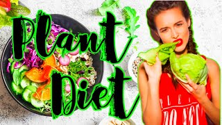 How To Eat a Plant Based Diet for Beginners | whole food plant based diet   plant based food