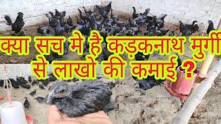 Download Kadaknath Murgi Videos - Dcyoutube