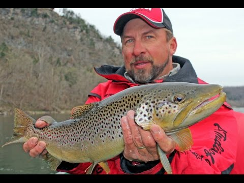 Brown Trout on the Arkansas' White River