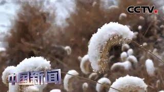 [中国新闻] 中国多地迎2020年首场降雪 | CCTV中文国际