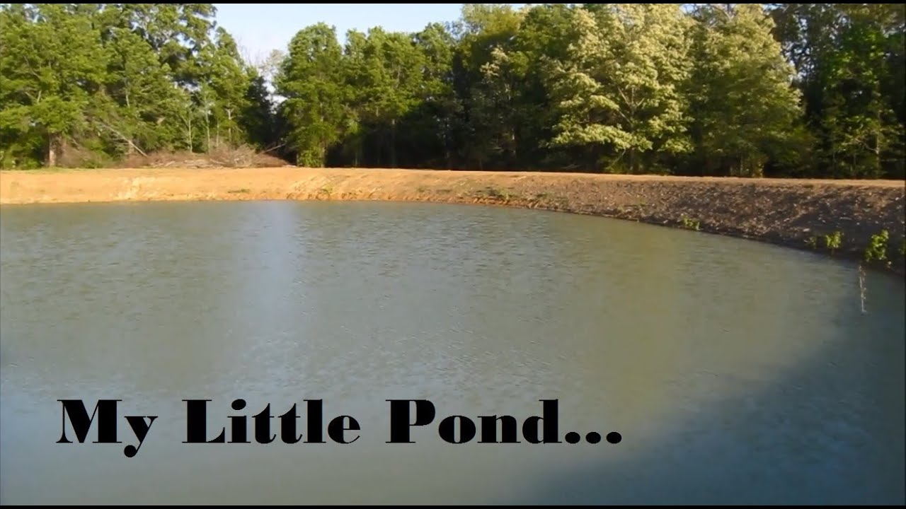 Pond clearing stocking hybrid bream youtube for Keeping ponds clean without filter