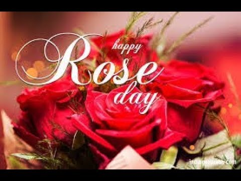Rose day images download hd