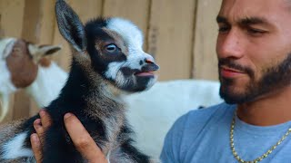 adorable-baby-goat-born-on-the-ranch