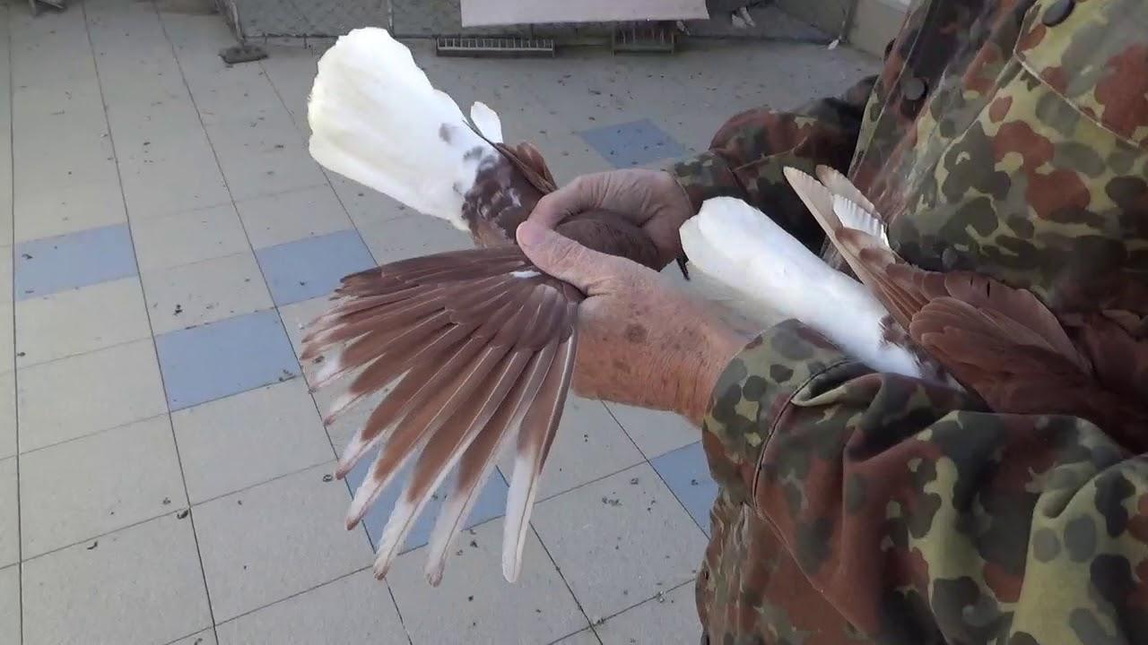 Николаевские голуби город Элиста - YouTube