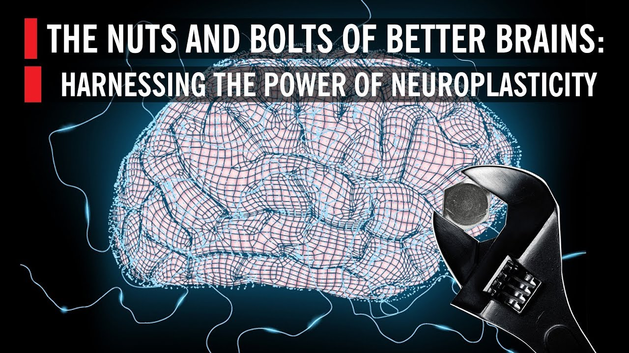 The Nuts and Bolts of Better Brains: Harnessing the Power of Neuroplasticity