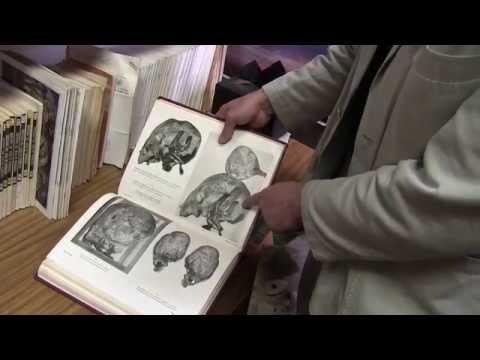 Tiwanaku, Puma Punku, Elongated Skulls, Gobekli Tepe & Worldwide Connections