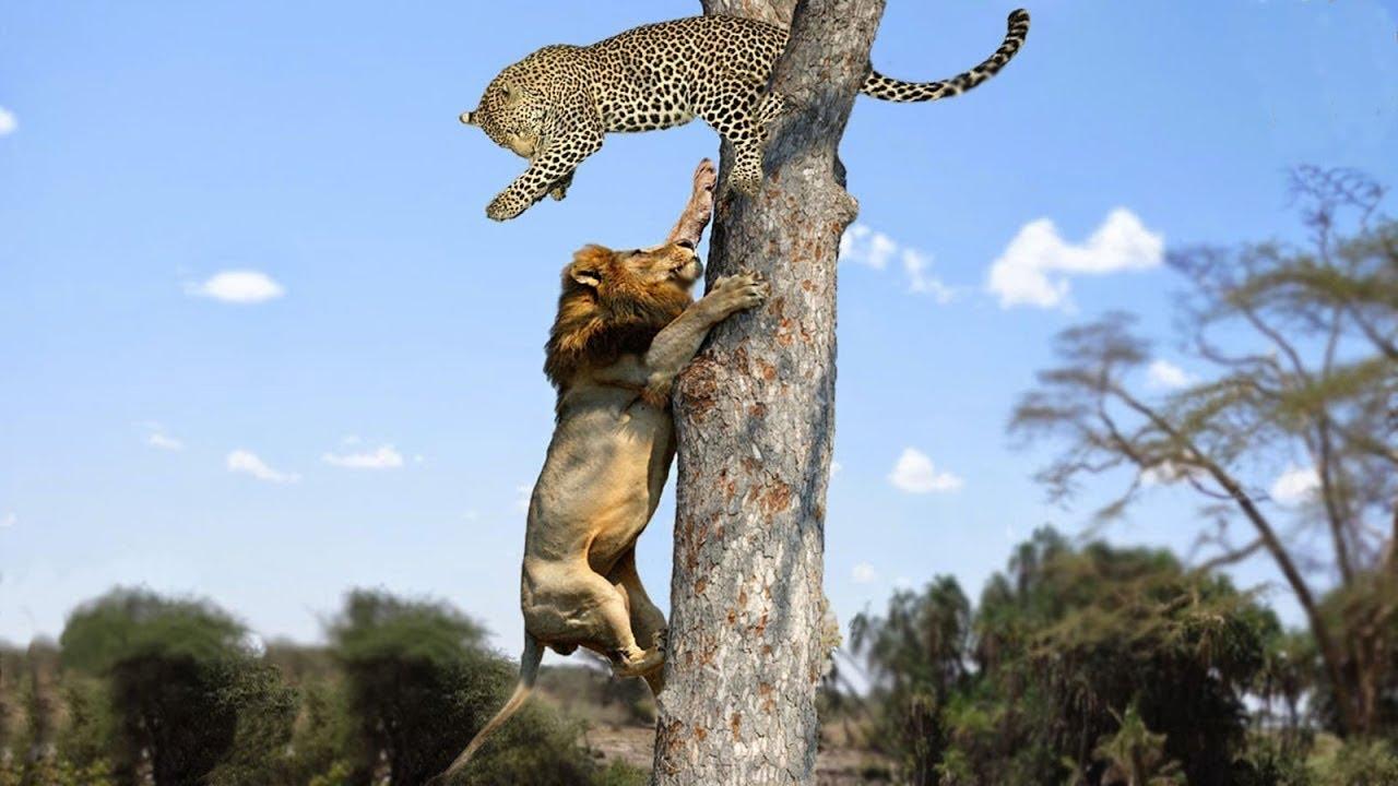 Most Amazing Moments Of Wild Animal