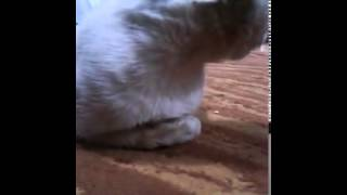 السعودية خادمة وضعت السحر في القط