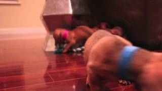 Mini/ Dachshund Puppies | Ella-sassy-hezi-paws-chips
