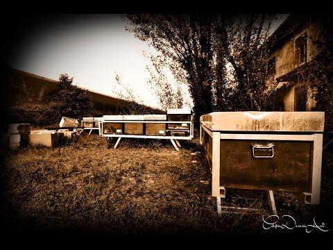 la Fabbrica delle api #FABBRICA ABBANDONATA