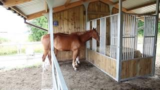 Equi-Station Abri pour chevaux