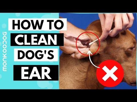 How to Clean Your Dog's Ear in 5 Simple Steps || Monkoodog