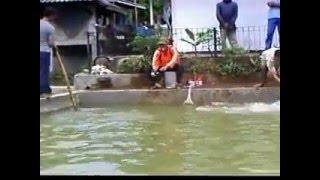Mancing Ikan Mas Di Kolam