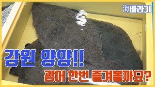[海바라기]  강원도 양양 광어