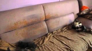 Котята разносят дом