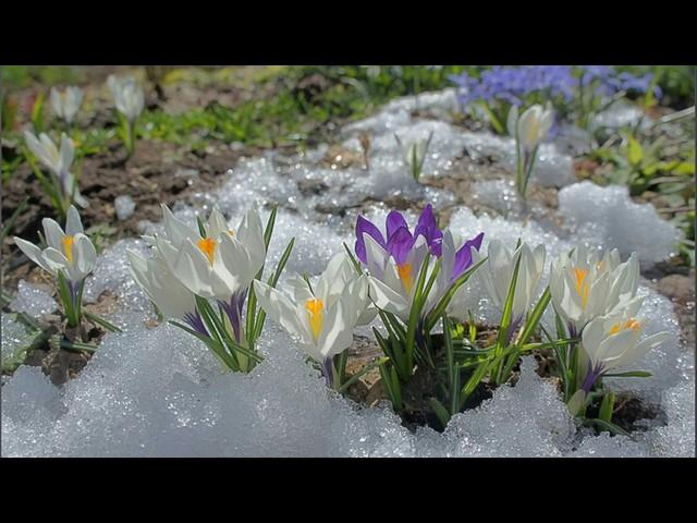 Изображение предпросмотра прочтения – КостяПантелеев читает произведение «Весна (Зима не даром злится…)» Ф.И.Тютчева