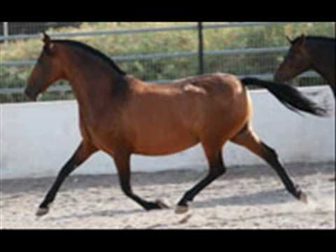 Andalusian Pre Horses For Sale Youtube