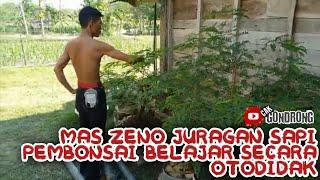 Koleksi bonsai mas zeno juragan sapi,petani bonsai asal tuban,otodidak lur!!!!