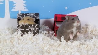 Day 8: Hamsters Love Boxes Too - Cute Hamsters: 12 Days of Christmas