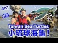 小琉球海龜!Taiwan Sea Turtles (Xiao Liu Qiu) (4K) - Life in Taiwan #131
