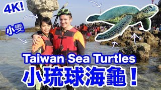 小琉球海龜!taiwan Sea Turtles  Xiao Liu Qiu   4k  - Life In Taiwan #131