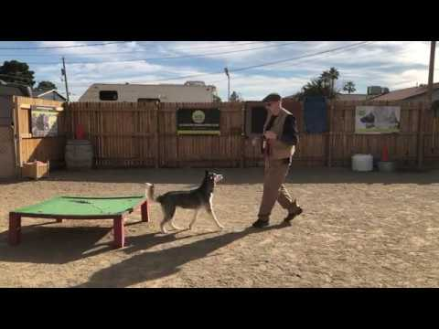 Voted A Best Dog Trainer in Las Vegas, Nevada