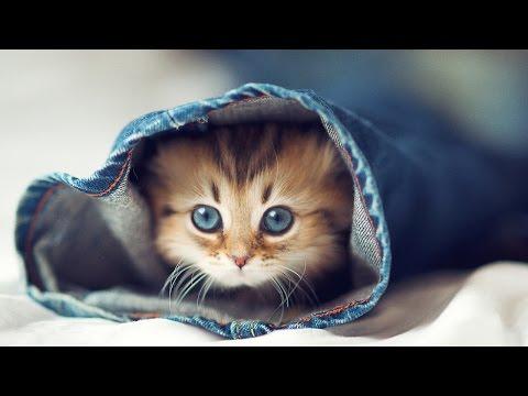 Приколы про кошек и котят самые смешные: милые котята [#10]