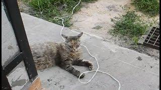Правильный кот грамотно слушает музыку