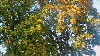 Осень в Александрии