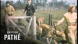 Greyhound Training (1959)