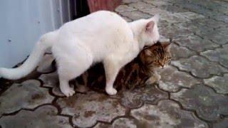 Весна Кошки приколы Spring Cat jokes