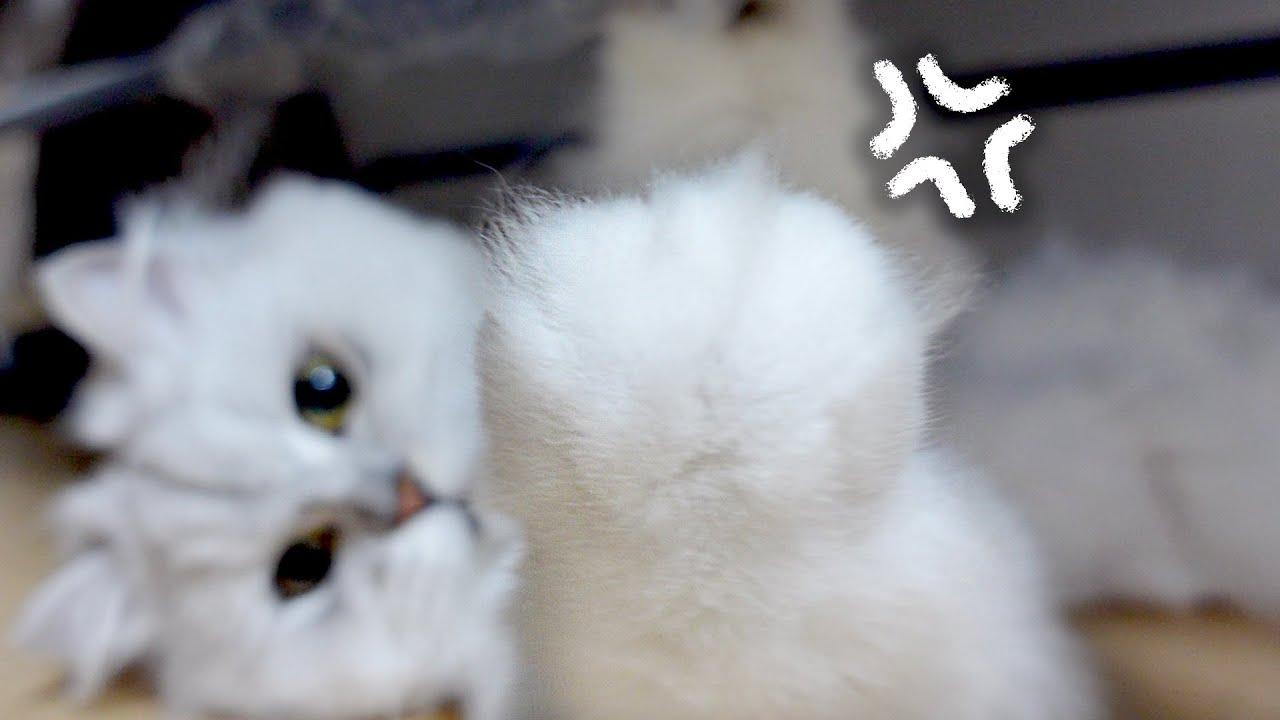 마동석 근육을 가진 고양이의 비밀