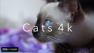 Cats 4k (Ultra HD)⎜Part 2⎜Relaxing Music⎜Earth from Above⎜Sweet Kittens, Siam Cats, Black Cats 4k