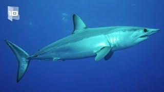 10 tubarões mais perigosos e agressivos do mundo