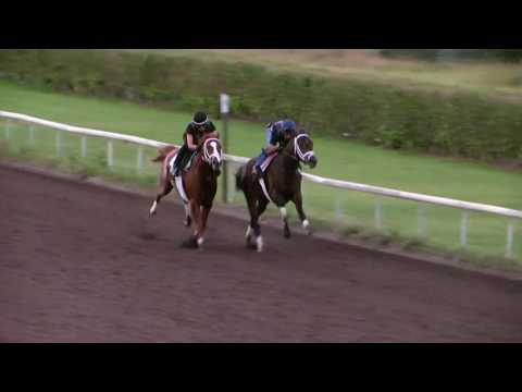 Neolithic works at Palm Beach Downs 1/14/17