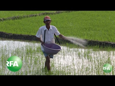 Vietnam Rice Boom a Strain on Farmers, Environment