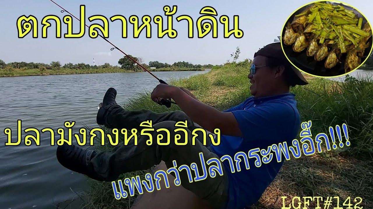 ตกปลาหน้าดิน ปลามังกงหรือปลาอีกง งงล่ะสิ แพงกว่าปลากระพงอี๊ก!!! LGFT#142