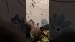 Продаются котята 4 штуки