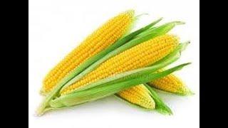 Отвечаю на вопросы о сахарной кукурузе.