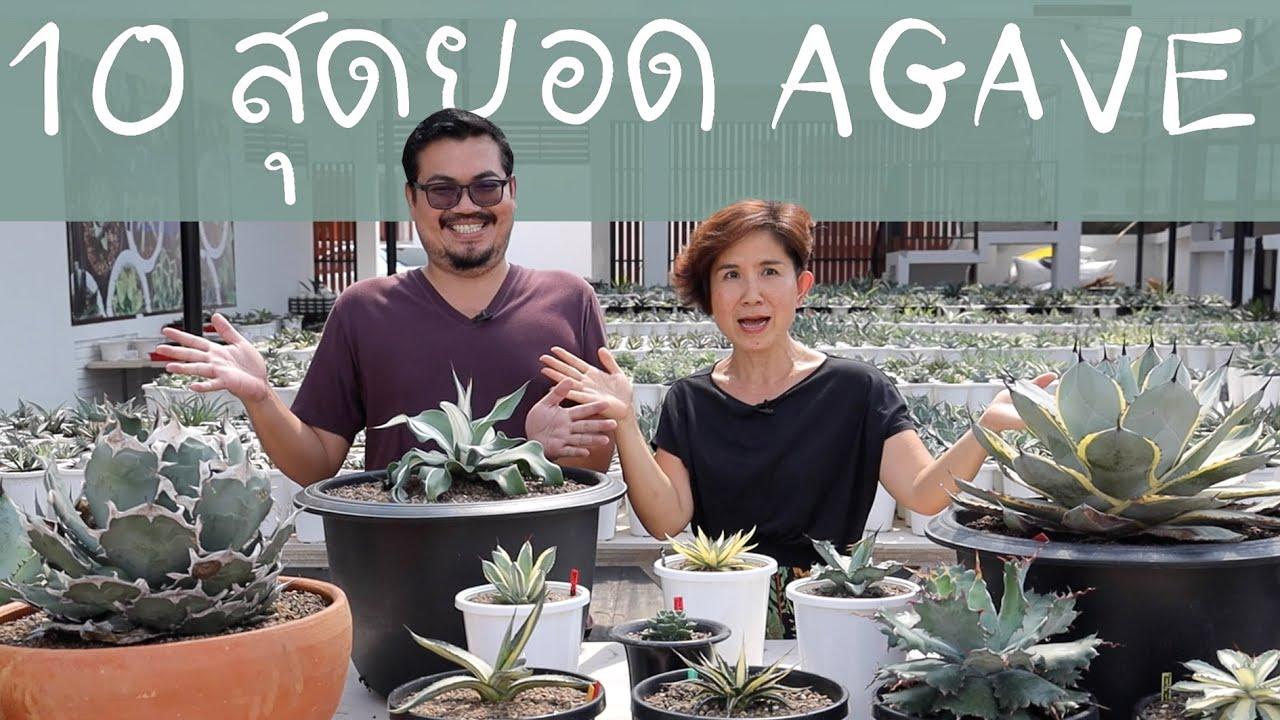 10 สุดยอด Agave (อากาเว่) ของตูน เทพชัย | Cactus Journey EP.93