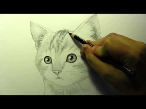 видео: Как нарисовать котенка kinoglobus.net.ua