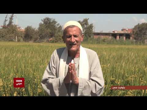بتوقيت مصر : تقرير عن زراعة الأرز في مصر بعد خفض مساحات زراعة الأرز  - نشر قبل 3 ساعة