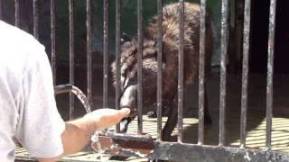 Волк чистит зубы